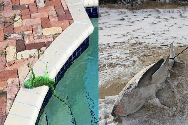 Animales congelados por el ciclón bomba